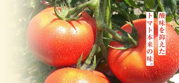 丹波の赤鬼姫トマト